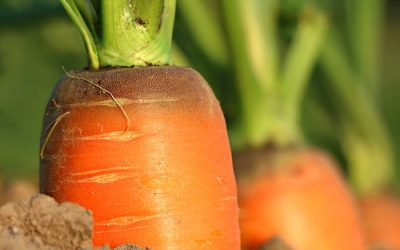 The Benefits Of Vitamin A And Beta-Carotene